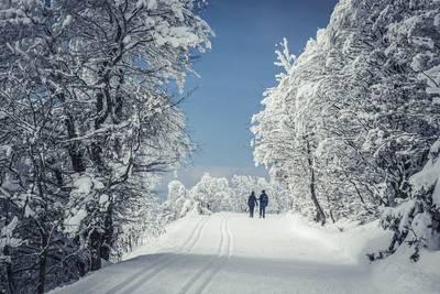 Geführte Winterwanderung. (© Hochschwarzwald Tourismus GmbH)