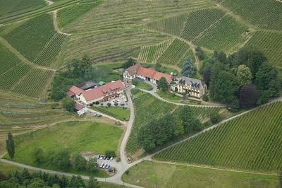 Maihock auf dem Weingut Freiherr von Neveu