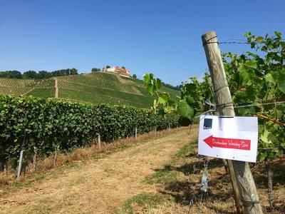 24. Durbacher Weintag