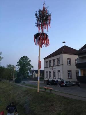 Maibaumstellen in Ebersweier