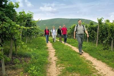 Weinwanderung zum Weingut Schwab