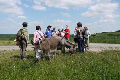 Eselwanderung im Biosphärenreservat Bliesgau