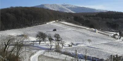 Markgrfler WeinKolleg - Ein Wintertag im Weinberg mit Einblick in den Keller
