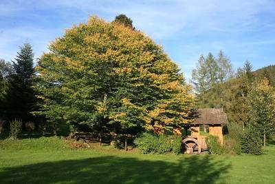 Interner Link zur Veranstaltung: Enztäler Pilzwoche 2019: Pilze, Wald & Wild im Herbst