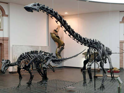 Permanent exhibition at the Senckenberg museum. (© Senckenberg Museum Frankfurt)