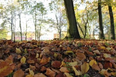 Herbstbasar in Hattstedt. (© Tourismus und Stadtmarketing Husum GmbH)