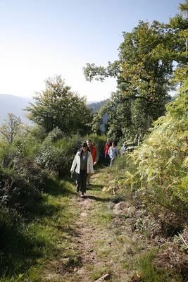 Interner Link zur Veranstaltung: Enztäler Pilzwoche - Wanderung in die Pilze