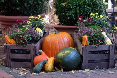 Herbstmarkt im Kurpark