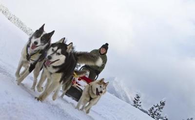 Husky-Schlittenhundefahrten