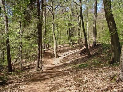 Wanderungen durch den Kirkeler Wald