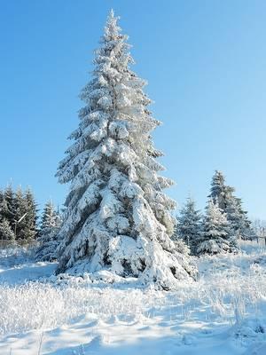 Winterwanderung auf dem Waldsaumweg