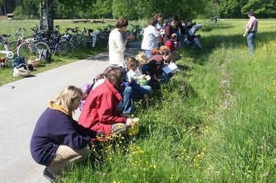 Kulinarische Wildkräuterwanderung Wiesenschmaus und Blütentrunk