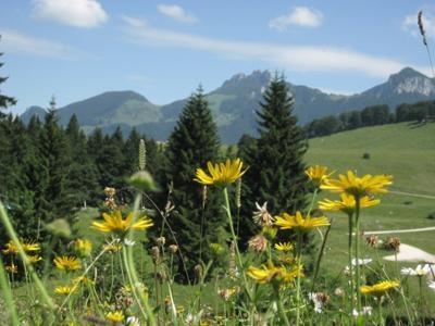 Bergblumen und Berggschichten auf der Kampenwand