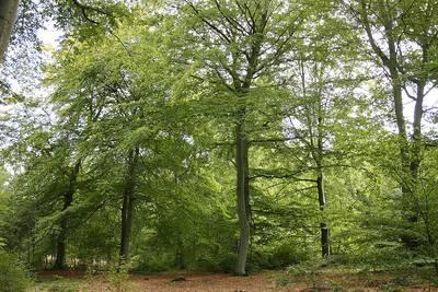 Geführte Wanderung durch den Pirrmannswald