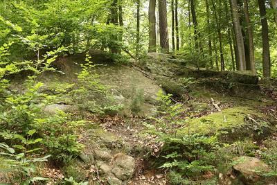 Der Wald im Biosphärenreservat Bliesgau  Waldspaziergang mit Natur- und Landschaftsführer Franz Stolz