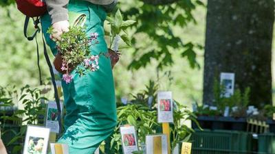 3rd Sapling Market for Native Flowers and Plants in Weggis