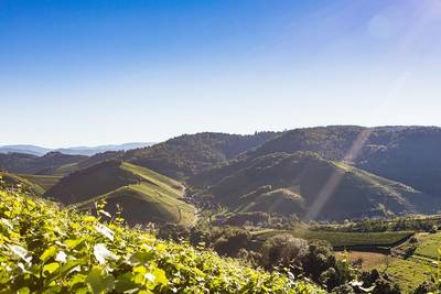 Oktober-Special - Weinwanderwochenende