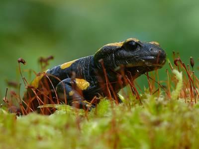Amphibien-Exkursion ins FFH-Gebiet Glder