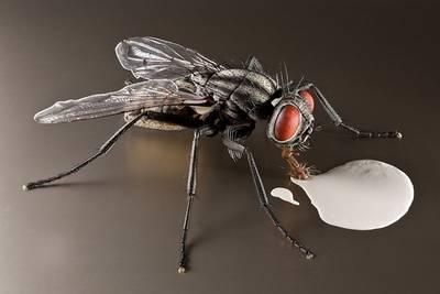 Sonderausstellung Insekten - kleine Tiere ganz GROSS