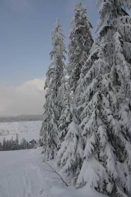 Interner Link zur Veranstaltung: Ausklang! Silvesterwanderung im Winterwald
