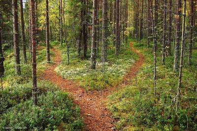 Wald. (© Bastan  fotolia.com)