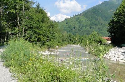 Natur-Heilkundliche Kruterwanderung am Auerbach