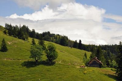 Gefhrte Wanderung zum Ursprung des Auerbaches