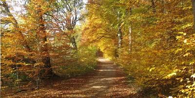 Mindelsee im Herbstkleid