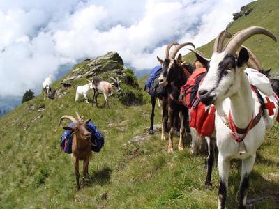 Südostschweiz Wandertage in Braunwald