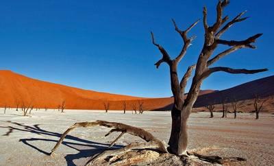 Bild Kinzigtal Weltweit - Namibia - Leben in extremer Landschaft