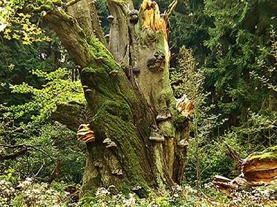 Der Baum, das unbekannte Wesen