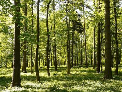 Waldführung mit dem Förster