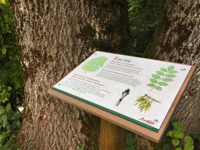 Fhrung - Die Waldapotheke