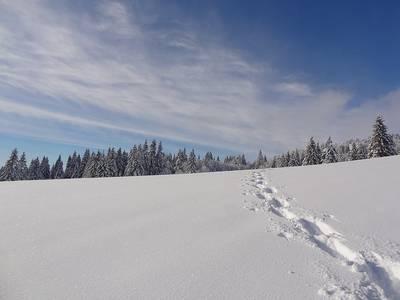 Winterlicher Hochschwarzwald  Geführte Schneeschuhwanderung am Schauinsland