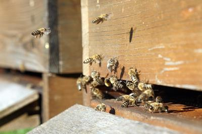 Besuch beim Bienenvolk