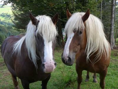 Kindersommer Begegnung mit dem Pferd