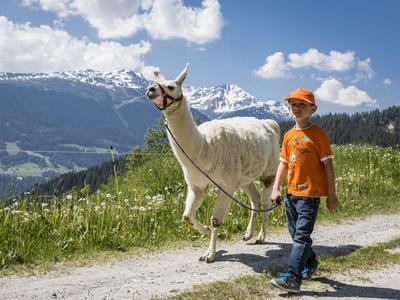 Ausflug mit Lamas - in BreilBrigels