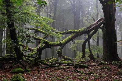 Erlebnistour im Nationalpark Hunsrück-Hochwald Wilde Kelten - alte Wälder