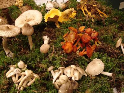 Pilzkunde Wochenende in Obersaxen Mundaun