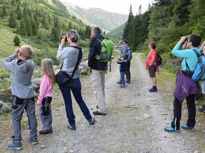 Wildbeobachtung in Obersaxen Mundaun