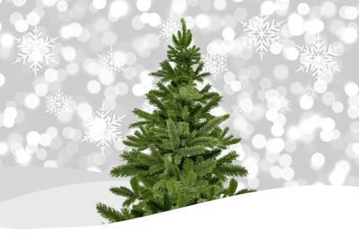 Weihnachtsbaumverkauf Schielberg