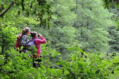Exkursion in den südlichen Urwald bei Saarbrücken