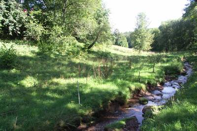 Interner Link zur Veranstaltung: Natur querbeet mit dem Verein für Pilz-und Wildkräuterfreunde