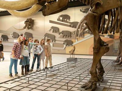 Natural History at the Senckenberg museum - digital