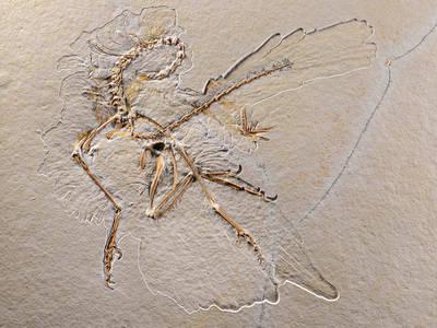 Archaeopteryx Nr. 11Sven Tränkner. (© Archaeopteryx Nr. 11)