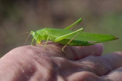 Pflanzen und Insekten - Hochsommer in der Trockenaue  Spte Blten, Blulinge und spannende Heuschrecken