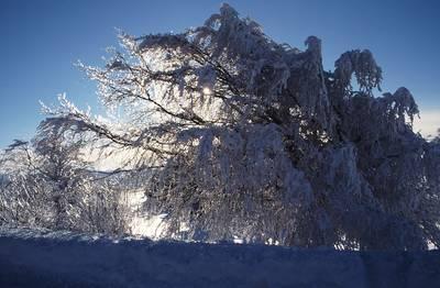 Wetterbuchen-Exkursion am Schauinsland bei Schnee mit Schneeschuhen