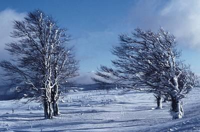 !!!BIS AUF WEITERES ABGESAGT!!! Schneeschuh-Panoramawanderung am Schauinsland