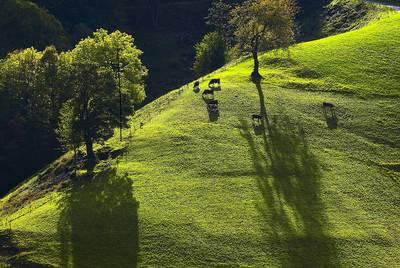 Senioren-Wanderung Gruppe II mit dem Schwarzwaldverein