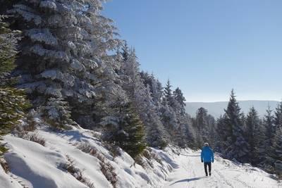 Winterwanderung auf Schwarzwaldhöhen und zur Hahnenfalzhütte